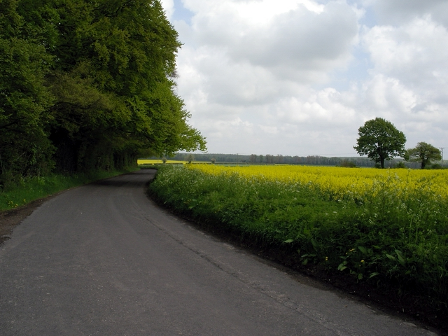 Field of rapeseed south of Micheldever Station