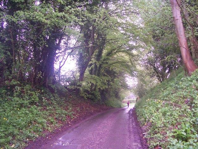 Road by Vann Farm, Empshott