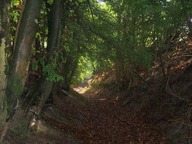 Path up to Warren Lane, Reston Hanger, Oakshott