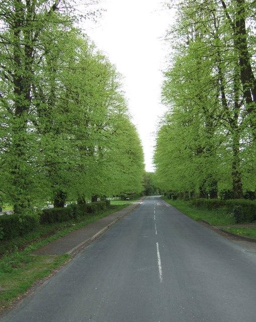 Avenue of limes, Halton