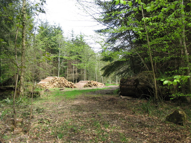 Felled timber in Longleat Forest