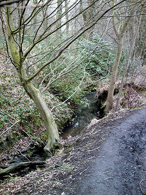 Dodds Grove - Prittle Brook