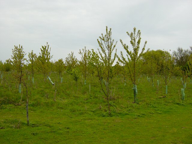 Worms Wood