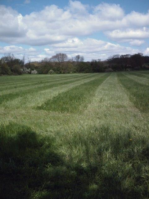 Hay field north of Rawreth Hall Woods