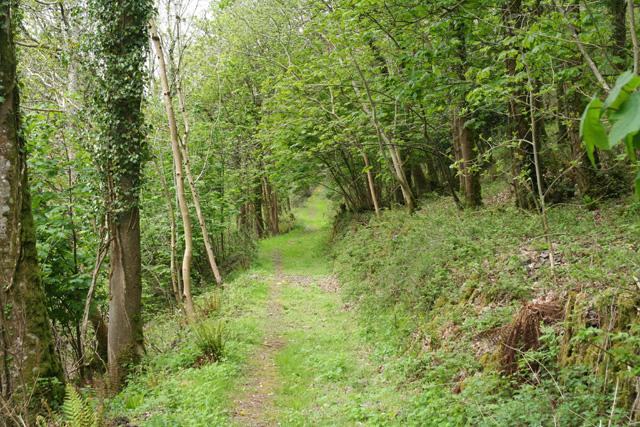Martinhoe: bridleway near Milltown