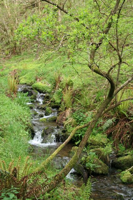 Martinhoe: stream near Kittitoe