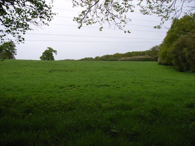Field below Halebourne Copse
