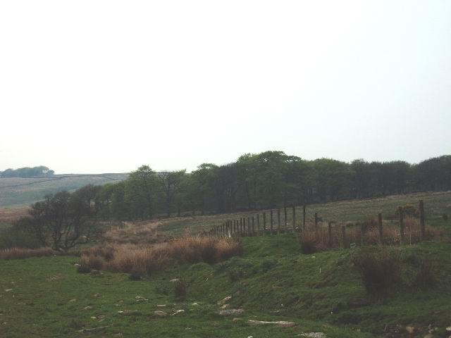 Dribble Wood