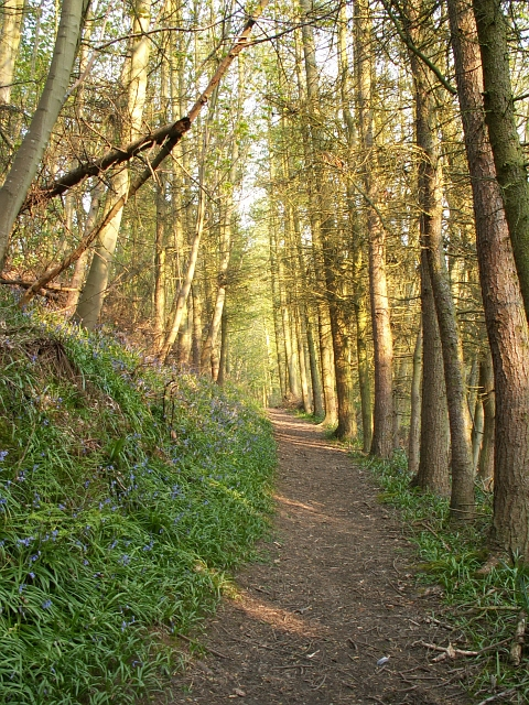 Dunino path