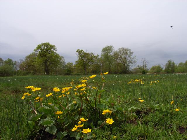 Boggy field beside Mill Bourne