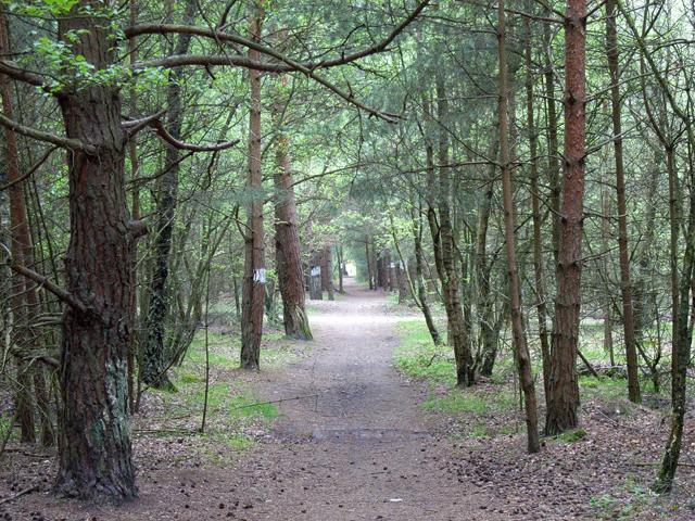 Bridleway to Heatherside Corner