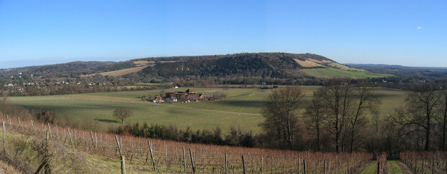 Denbies Vineyard and Box Hill looking east from the North Downs Way
