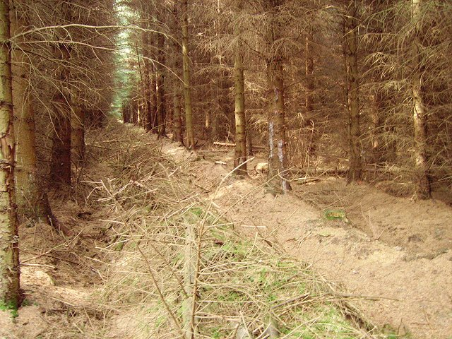 Extraction lane, Harehope Forest