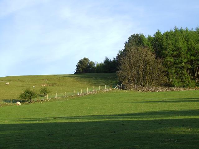 Fields near Coed Bronydd Isaf