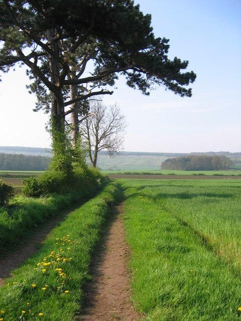 Thorpe Bassett - Track