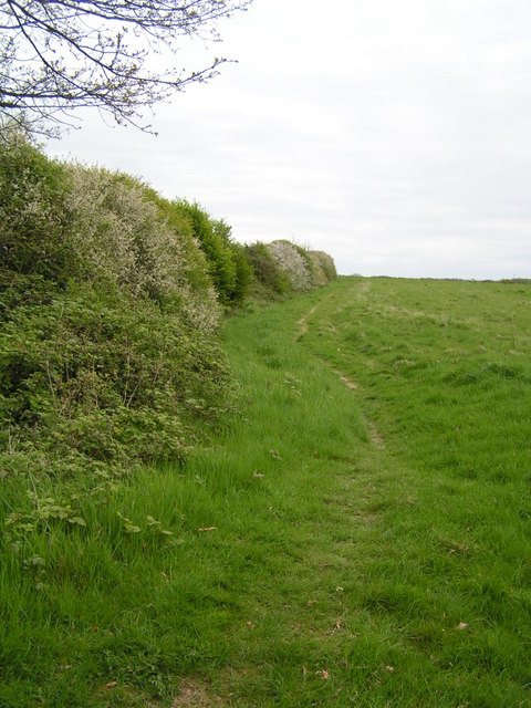 Hedge in Flower