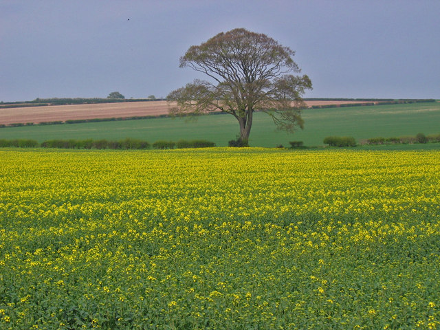 North of Kilham