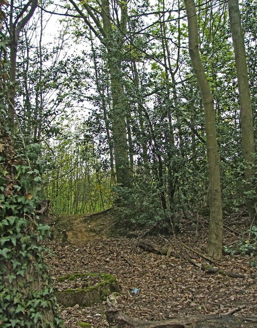 Woodland on north side of Hertford Road near Digswell, Hertfordshire