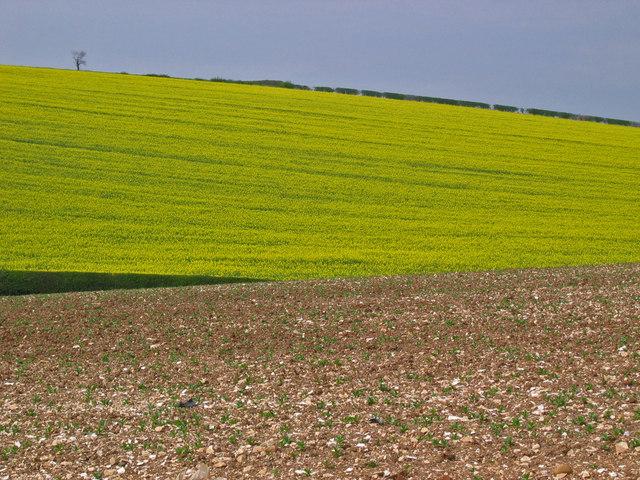 Farmland at TA069661
