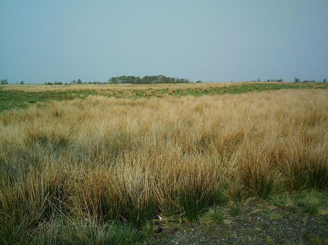 Marshy Field