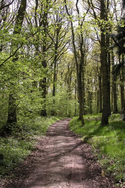Yatton Wood