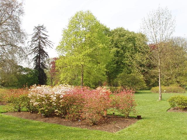 Azaleas at Kew Gardens