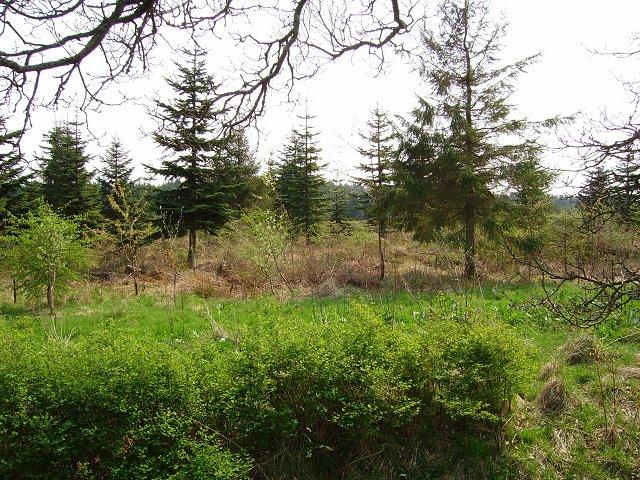 Woodland, Over Williamson.
