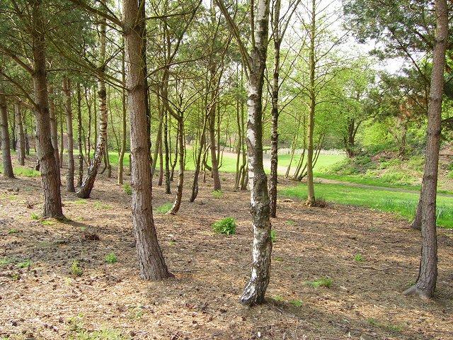 Woodland, Dedridge