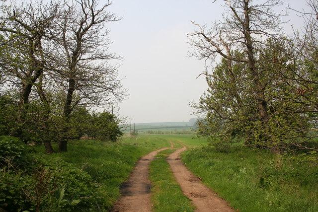 Twelve Acre Plantation
