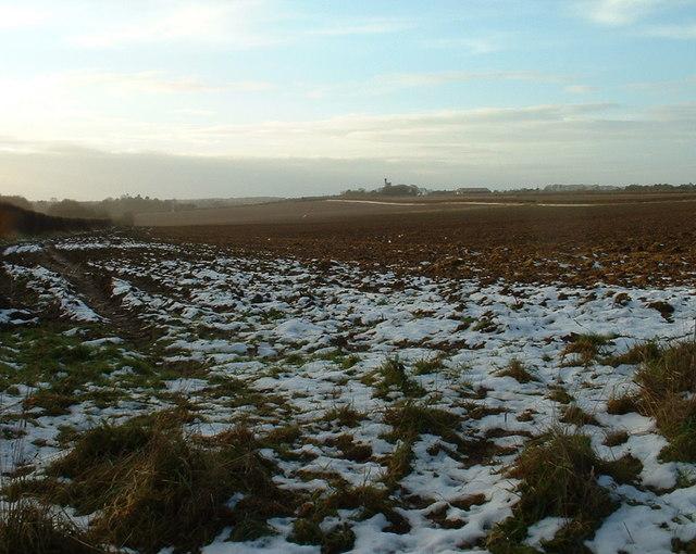Farmland towards Sandringham.