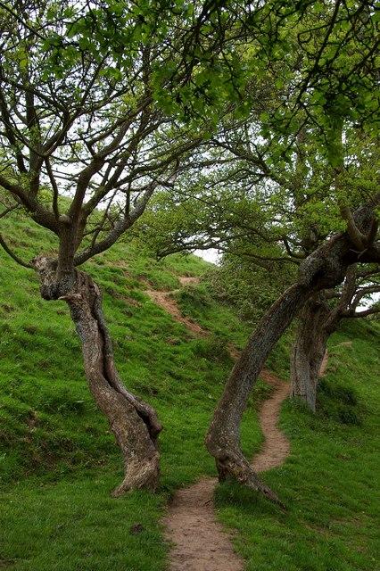 Tor Tree