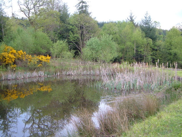 Pond in Kiddens Plantation