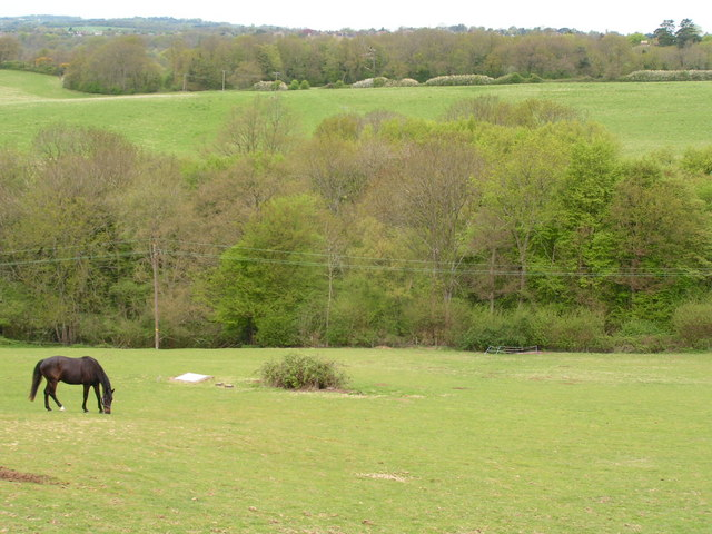Horse in a field with woodland
