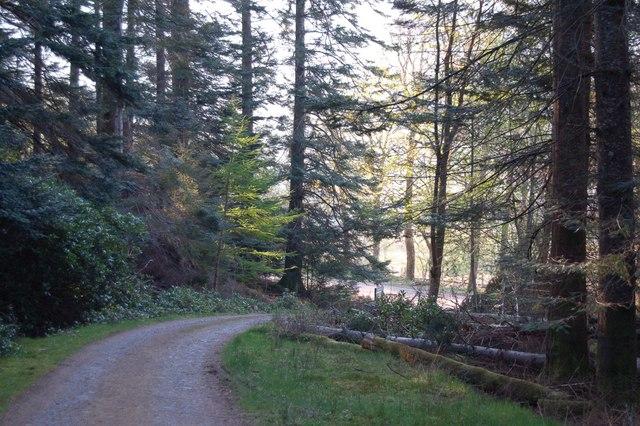 Achnashellach Forest