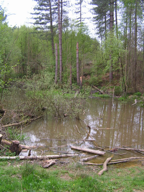 Pond in the Great Wood