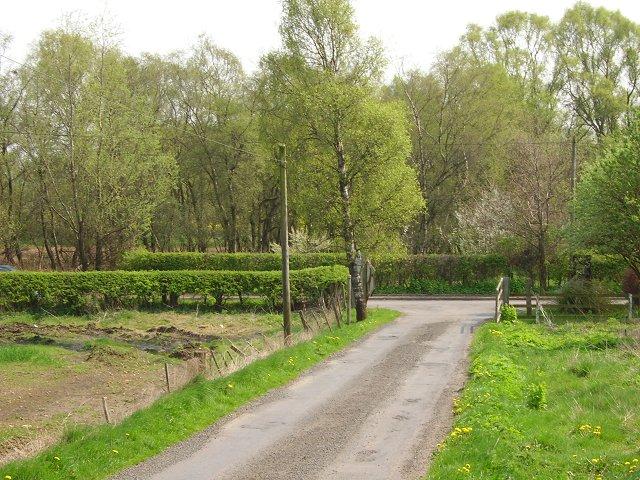 Woods, Breich