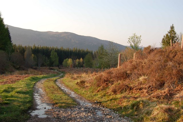 Forest Track in Strathcarron