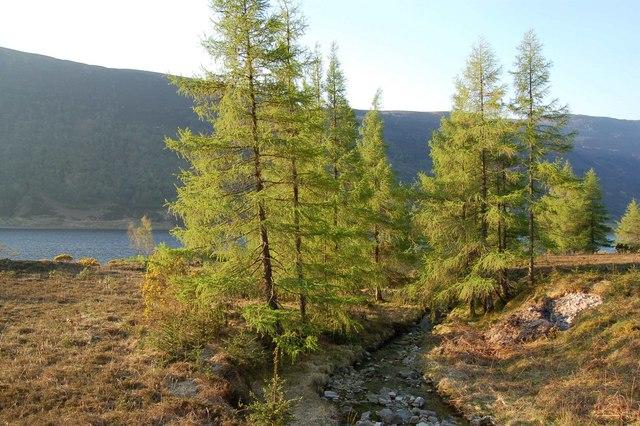 Trees by Loch Dughaill
