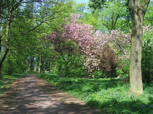Blossom at Farnley Park.