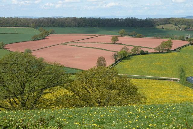 Ploughed Fields by Rock Farm