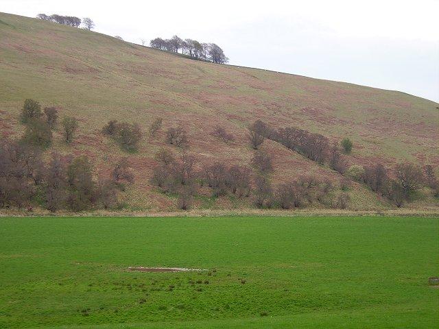 Wood Hill