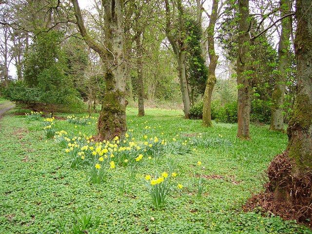 Spring woods, Callands