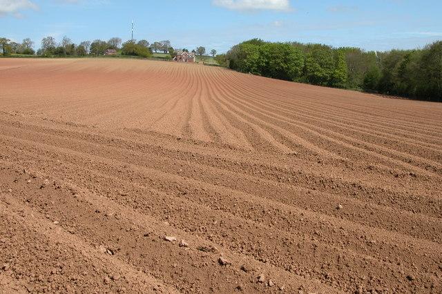Ploughed field, Yatton