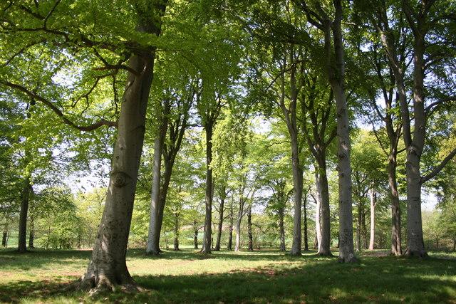 Rushey Inn Wood