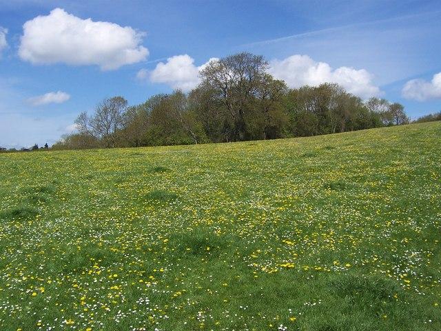 Organic Field, Tutshill