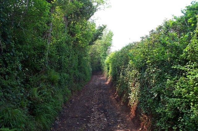 Hill Lane, near Carhampton