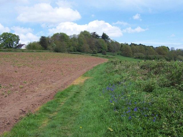 Field  south of Netherhope Lane