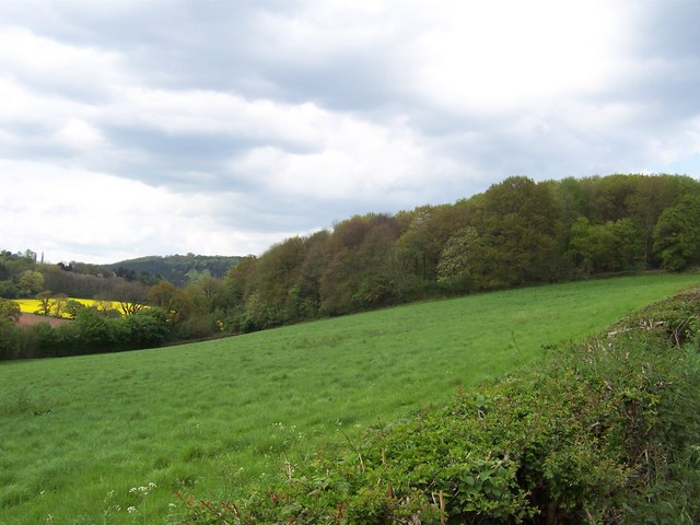 Bigsweir Wood