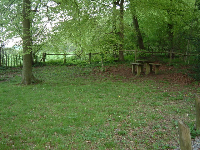 Picnic Site, Cockshoots Wood