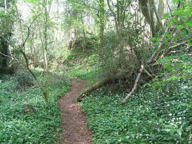 Offa's Dyke Path through Caswell Wood